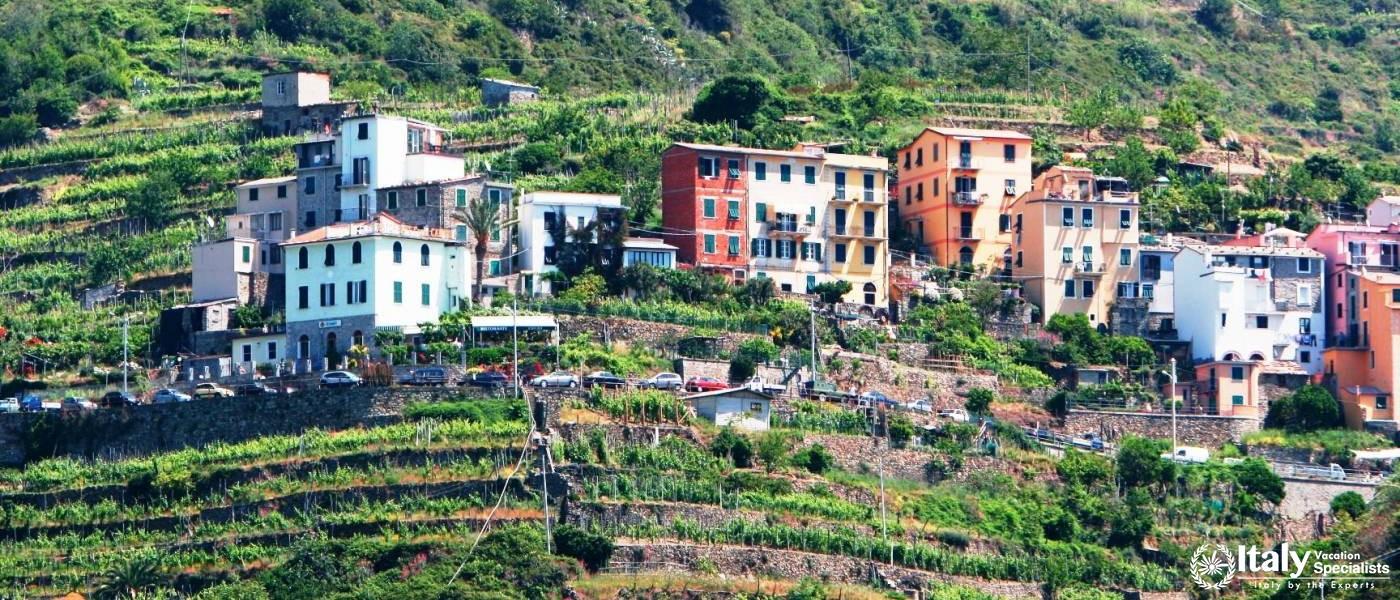 Cinque Terre Vineyard Trails - Corniglia