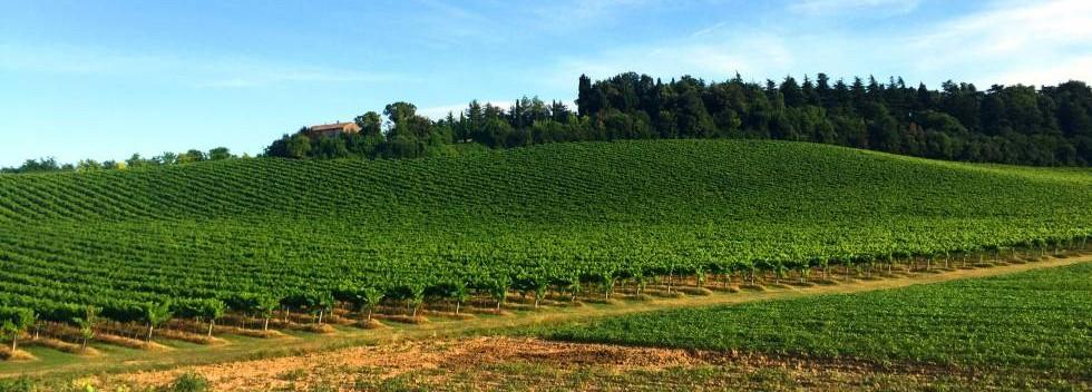 Vineyards of Emilia Romagna