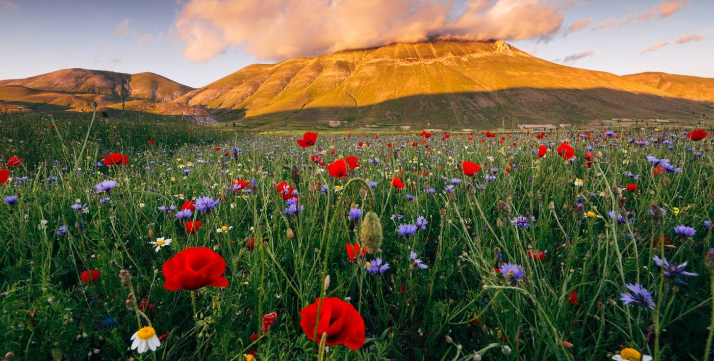 Castelluccio di Norcia Umbria Region Private Tours