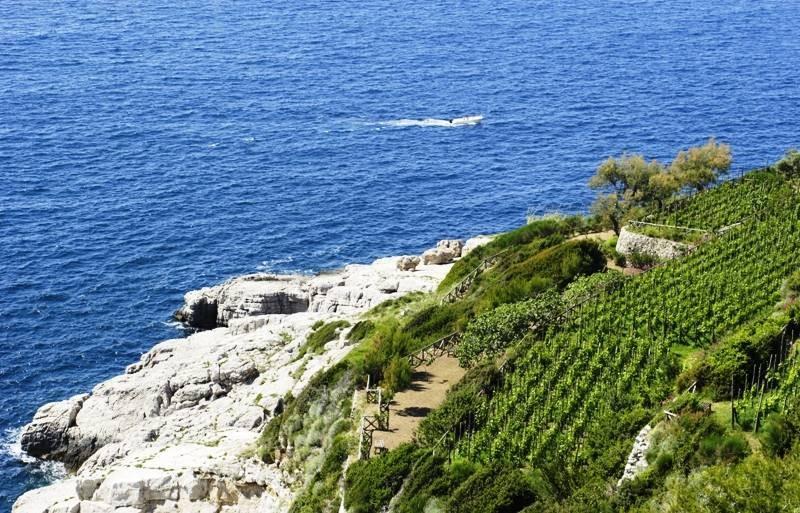Sorrento Vineyards