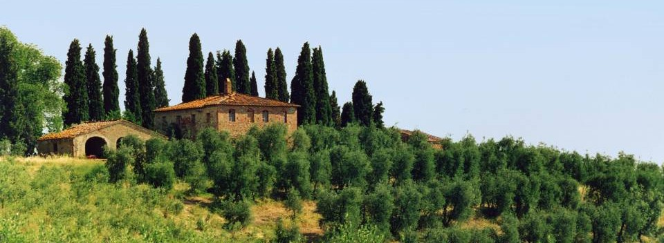 Tuscan farmhouse and olive trees