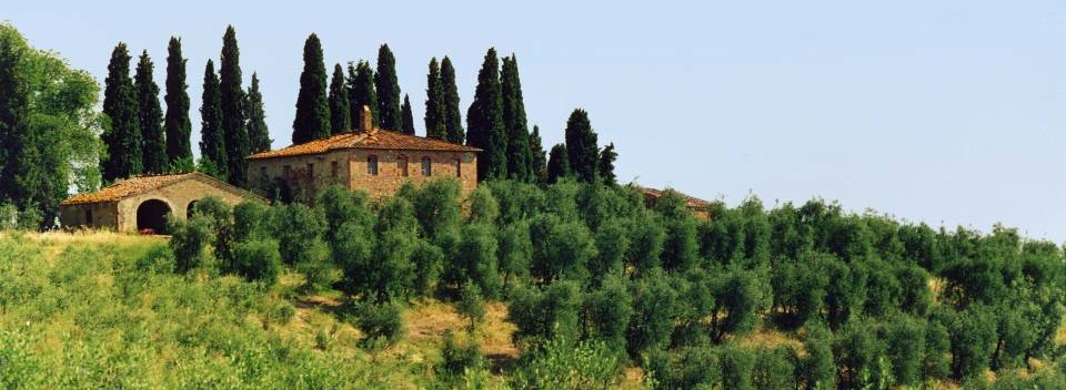 Tuscan Farmhouse and olive grove