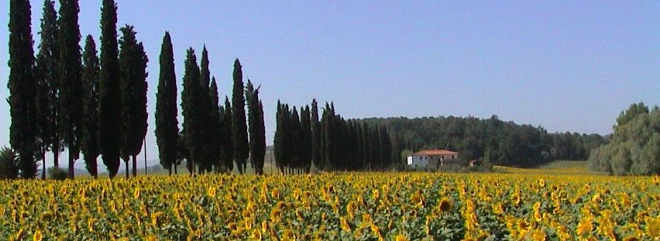 Tuscan Farmestate and Sunflowers