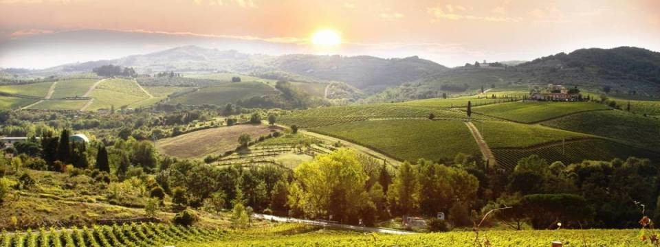 Vineyards as seen from Il Querceto in Castellina in Chianti, Tuscany, Italy