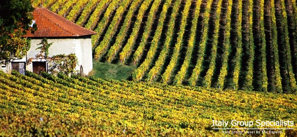 Experience the Very Best of the Barolo Wine Country