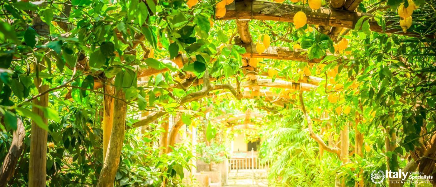 Step inside the Lemon Groves and Experience Fresh