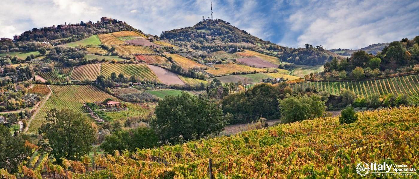 Countryside around Bertinoro