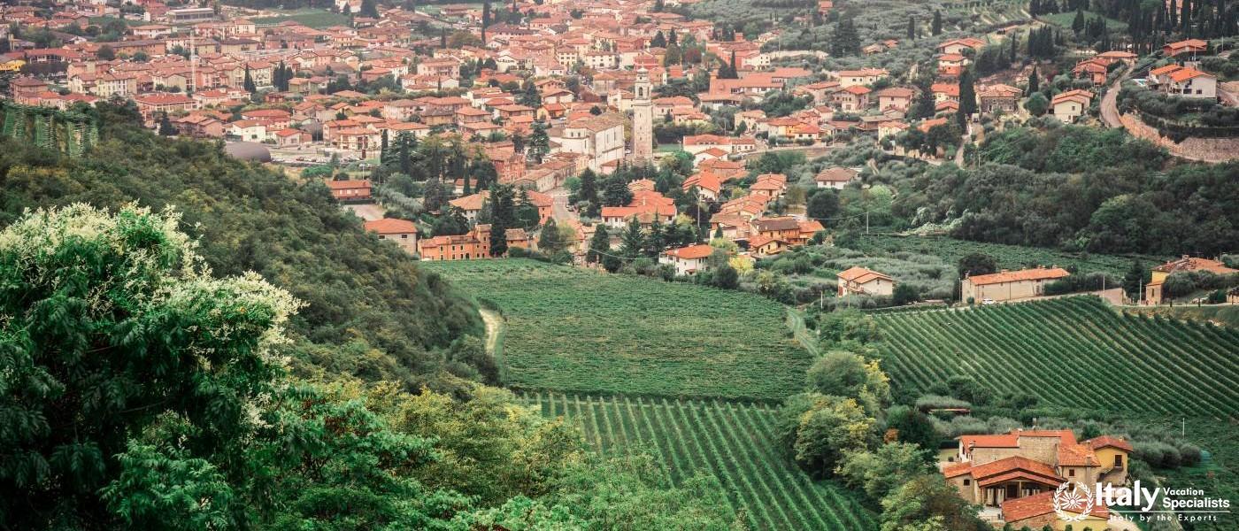 Valpolicella and Amarone Wine Tour from Venice