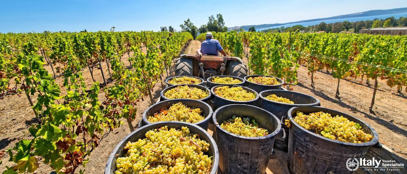 Experience Harvest Time in Italy