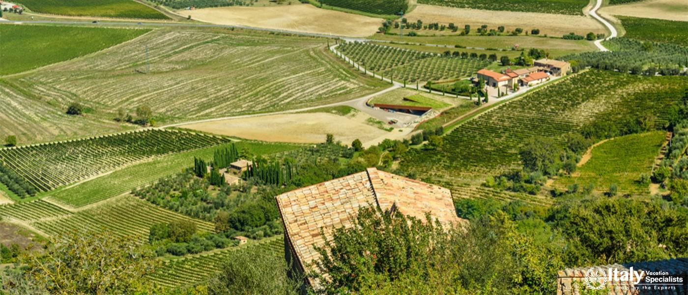 Beautiful view of vineyard and green field. Montalcino countryside, Tuscany, Italy